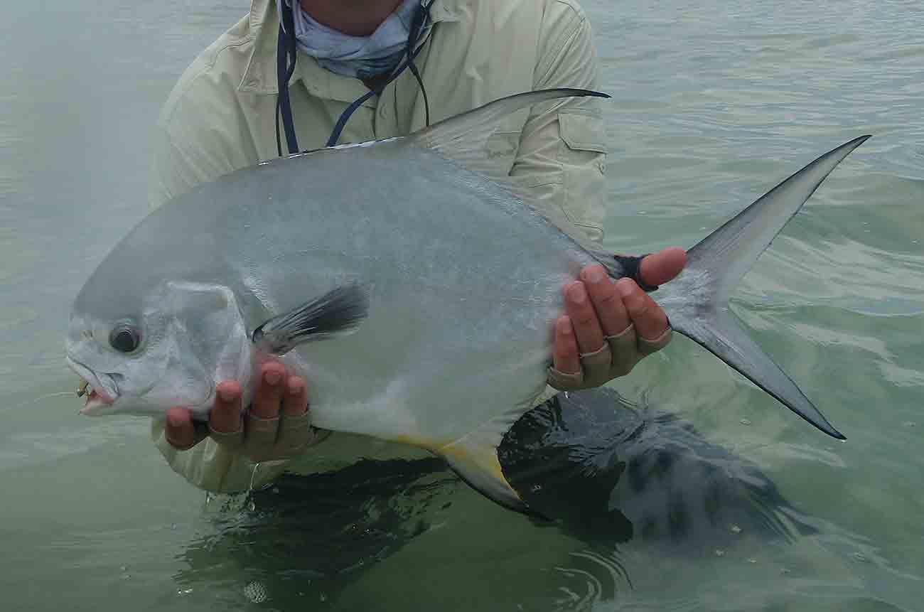 Permit Fly Fishing Ascension Bay Mexico